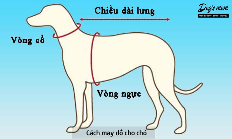 Hướng dẫn cách may đồ cho chó