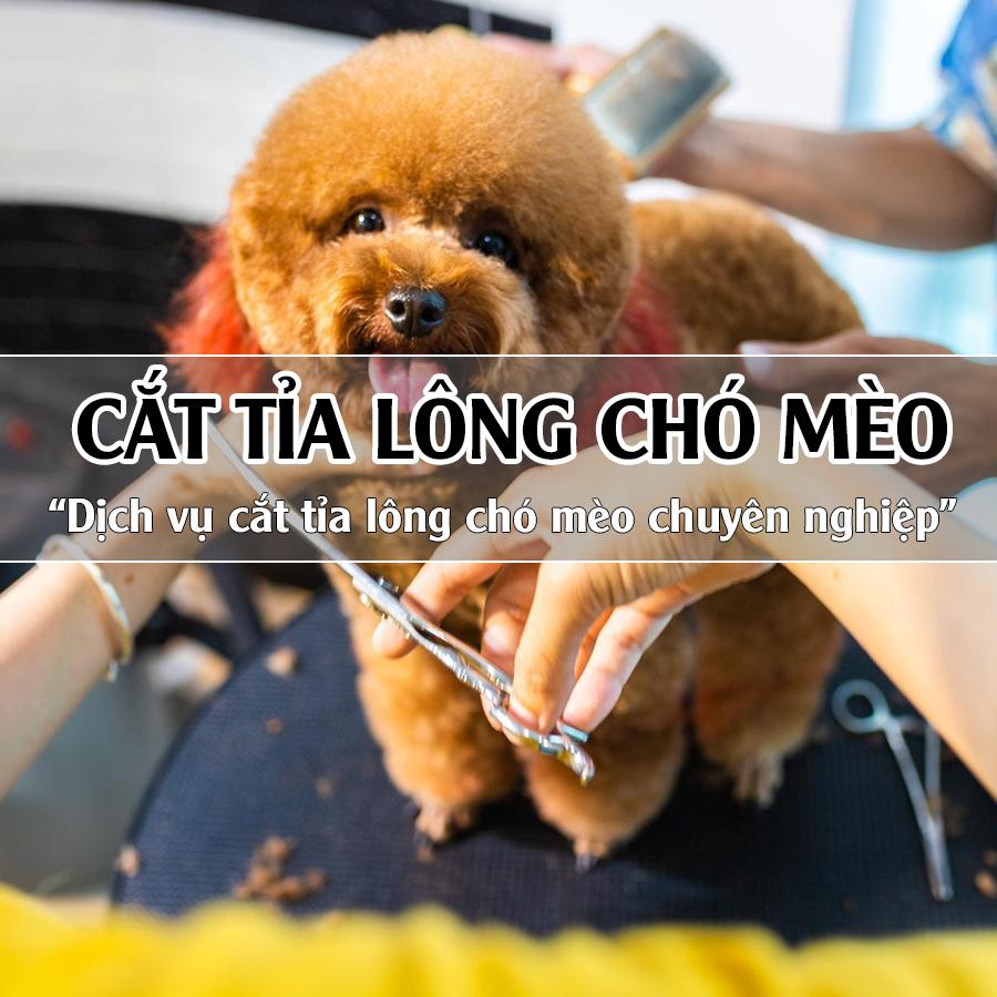 Dịch vụ cắt tỉa lông chó mèo