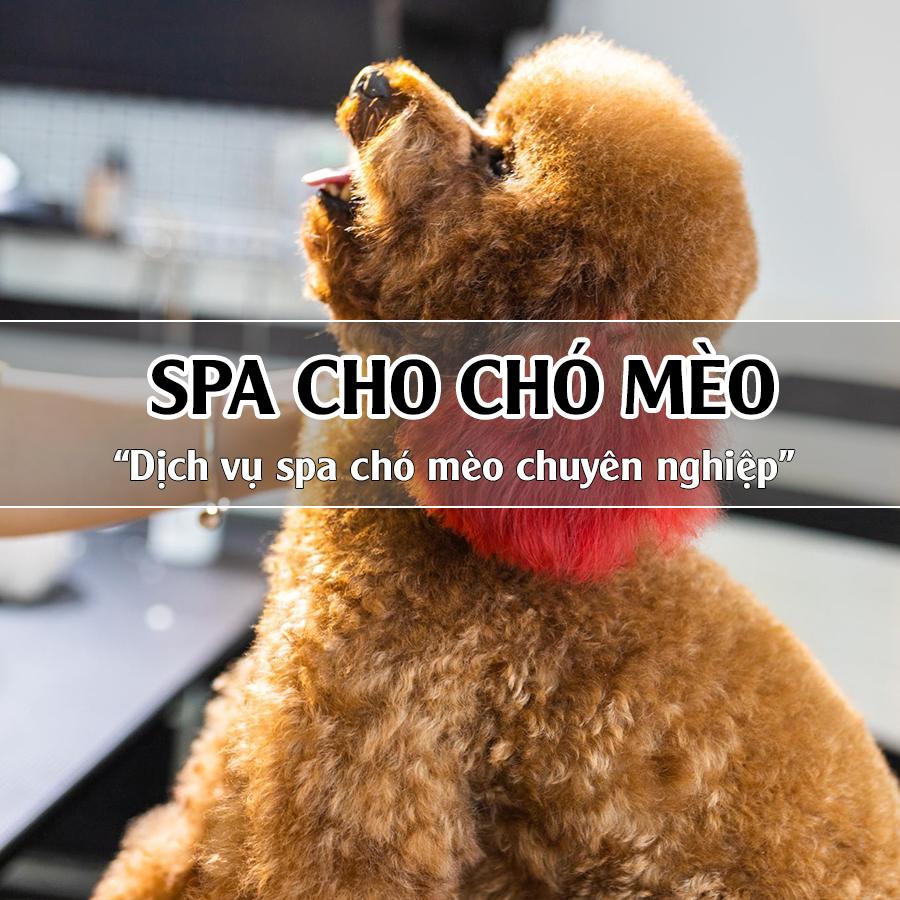 Spa cho thú cưng là gì?