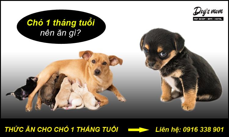 Thức ăn chó 1 tháng tuổi