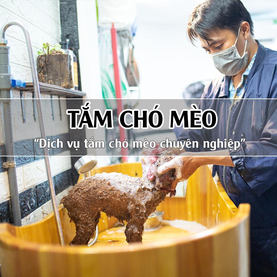 Dịch vụ tắm cho chó mèo