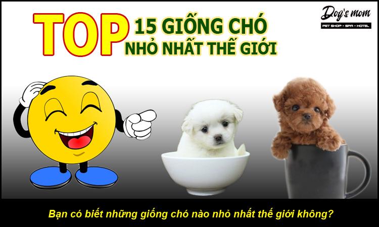 Top 15 giống chó nhỏ nhất thế giới