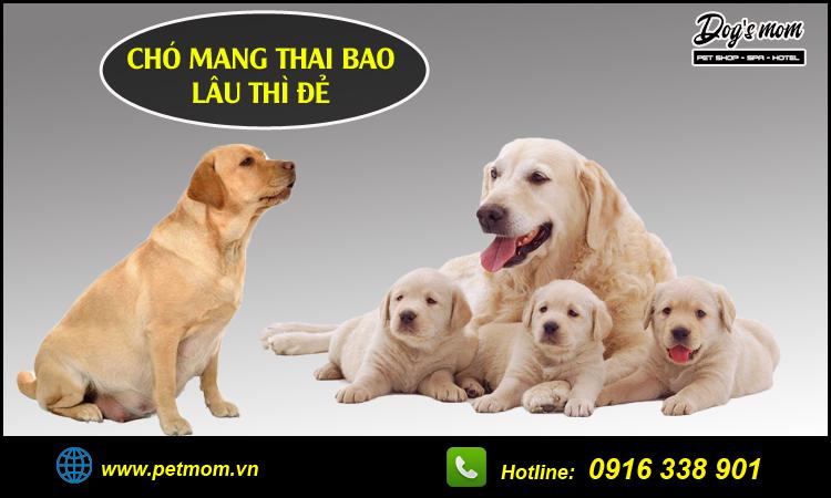 Chó mang thai bao lâu