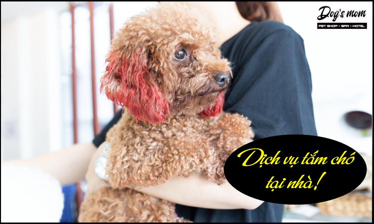 Có dịch vụ tắm chó tại nhà?