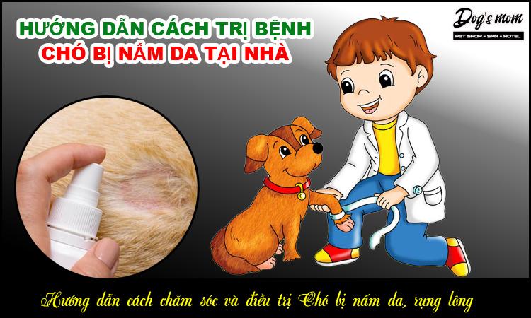 Hướng dẫn cách điều trị chó bị nấm da tại nhà