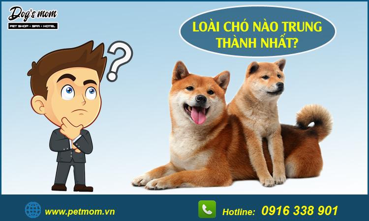 Loài chó nào trung thành nhất?