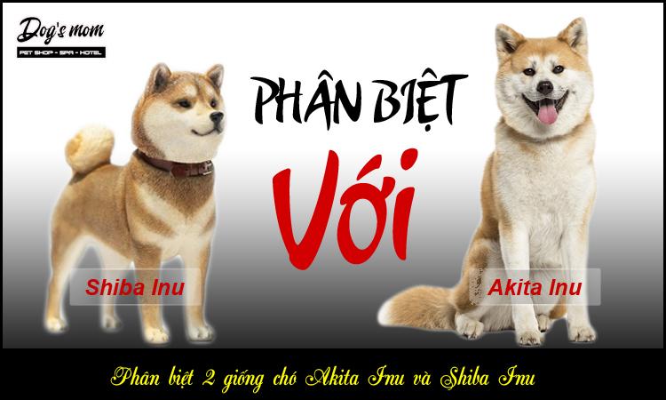Phân biệt chó Shiba Inu và chó Akita Nhật Bản